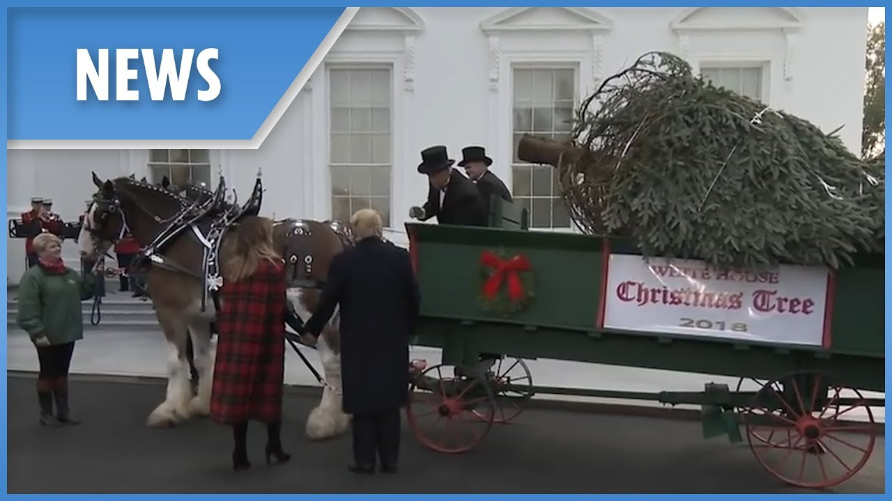 President-Trump-and-Melania-welcome-this-years-official-White-House-Christmas-tree