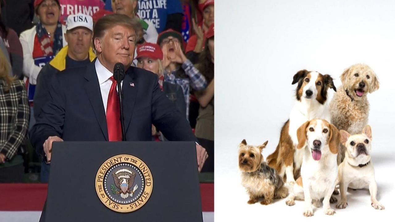 Dog-Breed-Suggestions-for-President-Trump